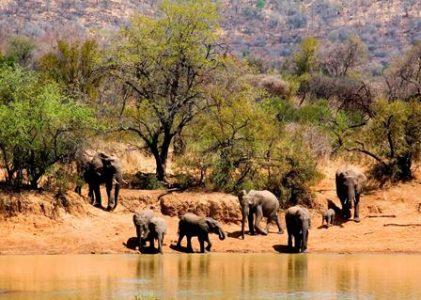 16 daagse safari Verrassend Tanzania icm Zanzibar