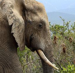 Groepsrondreis Zuid-Afrika Tuinroute