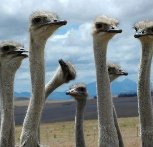 Familiereis ZUID-AFRIKA KAAPSTAD – KRUGER N.P. – 15 dagen; Van pinguïns tot de Big Five