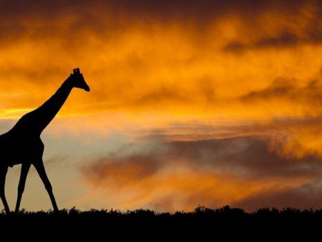 Familiereis ZUID-AFRIKA EN SWAZILAND AVONTUUR – 22 dagen; Op avontuur in Zuid-Afrika