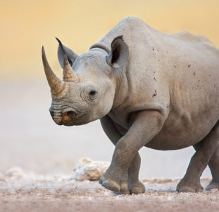 Rondreis ZUID-AFRIKA, NAMIBIË, BOTSWANA EN ZIMBABWE – 23 dagen; Afrika op z'n best