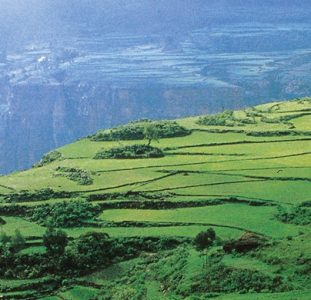 Rondreis ETHIOPIË – 30 dagen; Wierook en schotellippen
