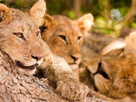 Rondreis ZUID-AFRIKA Kaapstad en Kruger N.P. – 15 dagen; Van Tuin- naar Panoramaroute