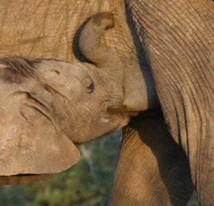 Familiereis ZUID-AFRIKA EN SWAZILAND Hotel – 15 dagen; In een levende dierentuin