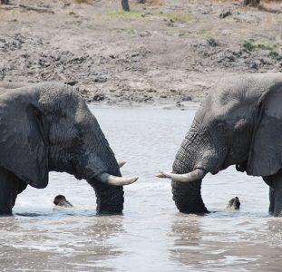 Rondreis BOTSWANA – 20 dagen; Natuur op haar best