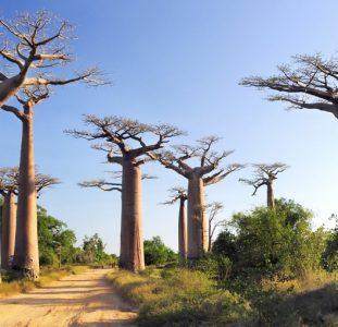 Rondreis MADAGASCAR – 30 dagen; Ringstaartmaki's en baobabs