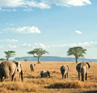 12-daagse Rondreis Wildparken van Tanzania