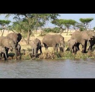 The Most Amazing Africa Wildlife, Serengeti | Tanzania Safari